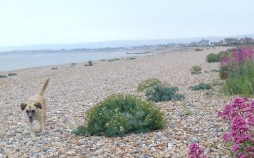 rita beach